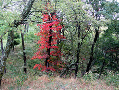 crimson framed (Minkum) Tags: autumn trees westvirginia soe blueribbonwinner abigfave