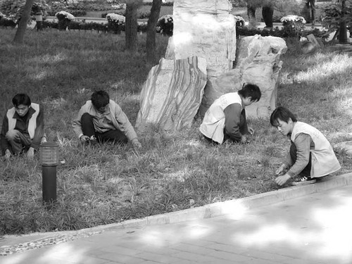 Workers in Ritan Park. What kind of work they were doing precisely, I couldnt fathom. They were cutting the grass with miniature sycthes: possibly picking flowers? Or their boss is simply too cheap to spring for a lawnmower.