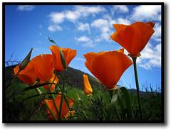 Un día primaveral (Errlucho) Tags: