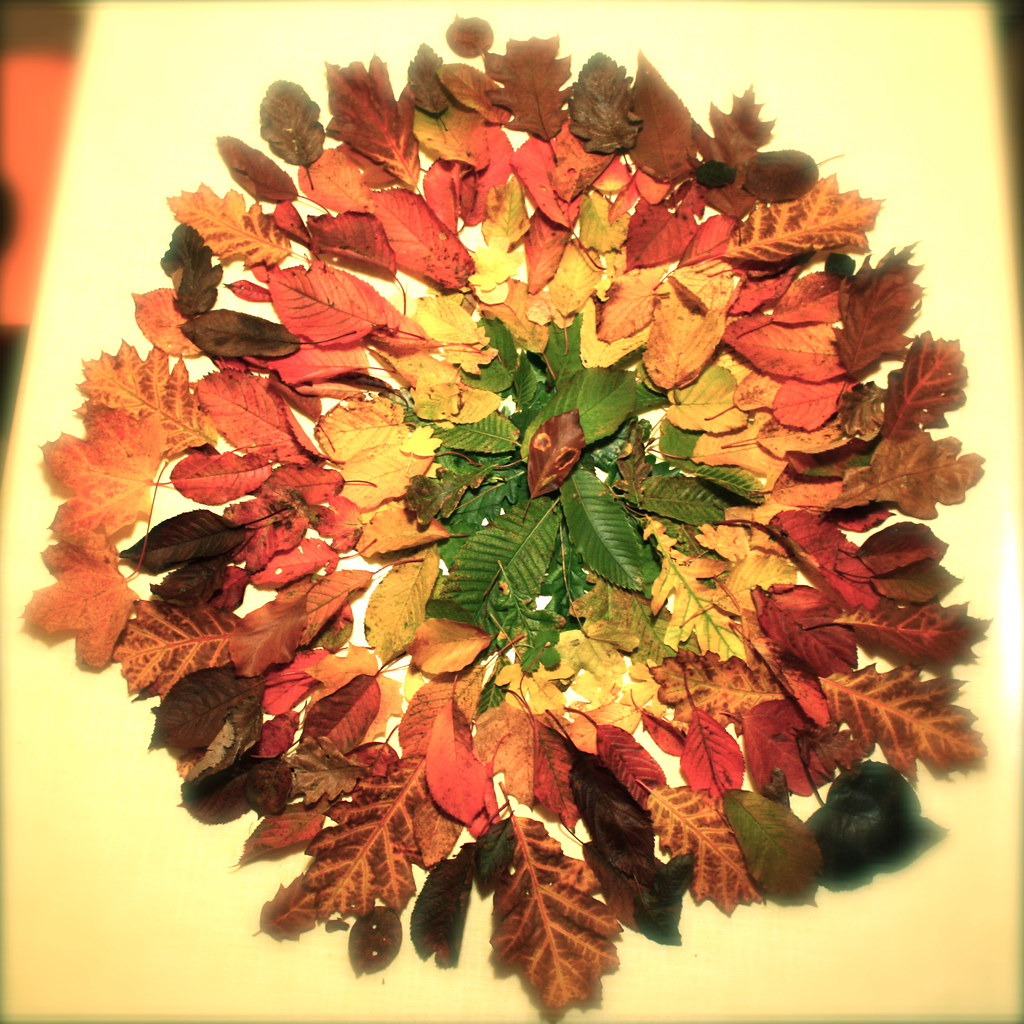 autumn leaves circle