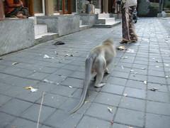 (tipsycat) Tags: monkey ubud monkeyforest  bali
