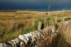 Georgemas Junction (Scotland) - Caithness Landscape (Danielzolli) Tags: uk greatbritain fence landscape scotland highlands alba unitedkingdom wiese paisaje scotrail escocia highland prairie haag paysage zaun landschaft stein szkocja regnounito wetter schottland caithness reinounido laka scozia grossbritannien cosse pogoda grandebretagne s brytania wielkabrytania pejsaz britannien vereinigtesknigreich briten skotsko scottishrailway georgemas schottischeshochland georgemasjunction aghaidhealtachd spojenkrlovstv skocko suurbritannia