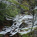 icy twigs above the river