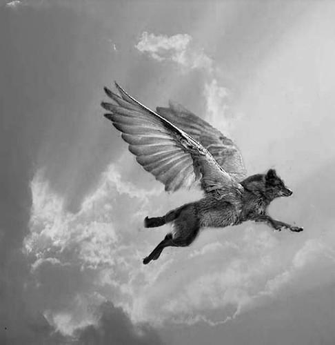 Flygande varg