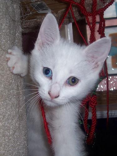 Kittens 04