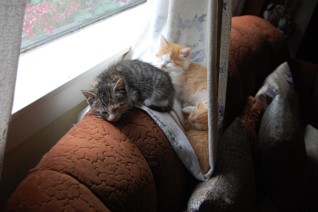 kitten curtain hammock