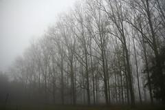 like lungs (Vlien*) Tags: autumn trees mist holland fog bomen belgium belgie border herfst nederland grens stekene koewacht
