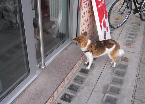 Wartender Hund, Dänenstraße
