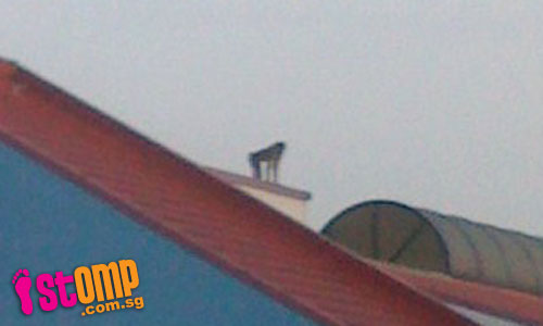Monkeys invade school, terrorising students and teachers