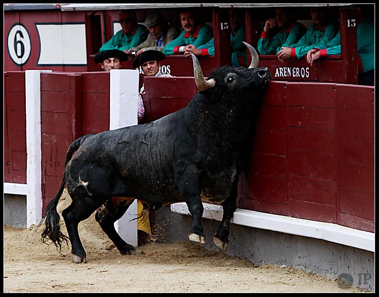toro-de-Pablo-Romero-2