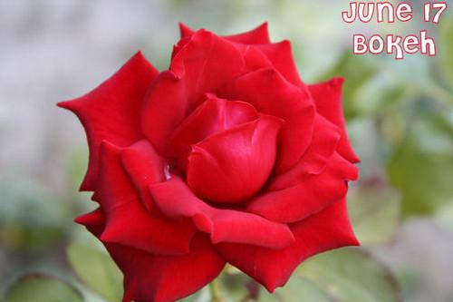 June 17--Bokeh