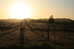 Sunset over Sonoma (LaMinch) Tags: sunset sonoma vineyards