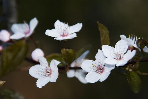 Spring_08