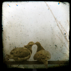 Promises (Gordana AM) Tags: two ontario canada love birds print kiss couple pigeon dove pigeons pair romance nostalgic windsor romantic etsy poe cheesy doves gentle sentimental layered palabra ttv abigfave atque superbmasterpiece diamondclassphotographer flickrdiamond texturesforlayers artificia theunforgettablepictures lepiafgeo memooriesbook