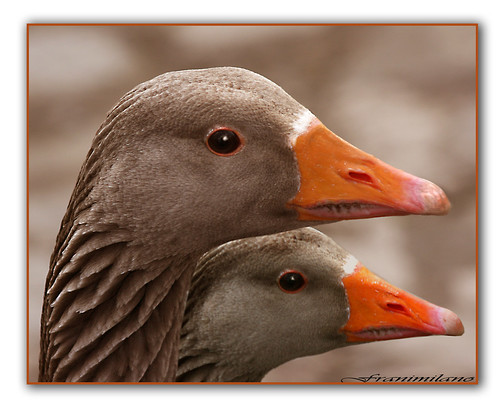 double duck by Franomilano