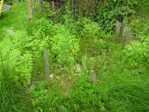 Garden Pre Weeding
