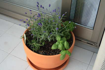 the herb pot