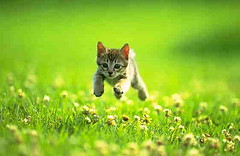 leaping in flowers (Joana Rojas - still here) Tags: cat jump kitten oscarsurrealeous