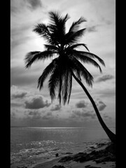 SOLITUDE (MayteVidri (busy / ocupada)) Tags: travel viaje sea sky bw music white playing black reflection tree blanco beach silhouette backlight night clouds reflections contraluz landscape arbol island noche mar sand agua bravo solitude paradise loneliness cloudy negro playa paisaje palm bn arena cielo solo palmtree nubes reflejo land lonely nublado soledad panama silueta reef msica palmera isla paraiso sanblas sola solitario kuna archipelago reflejos jugando tierra caribe arrecife caribean whater archipielago kunayala sd550 ixus750 vidri maytevidri islaperro goldenphotographer 20080427357