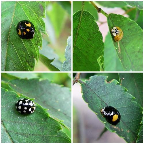 Ladybug tree