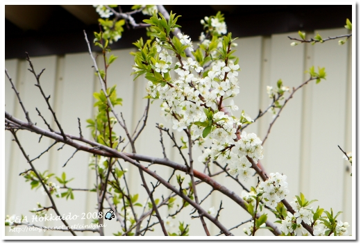 Hokkaido_0563