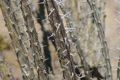 IMG_0729 (quinn.anya) Tags: arizona cactus saguaronationalpark