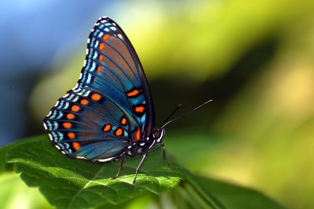 2008-06-21 butterfly 2