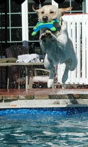 Pool's Open!