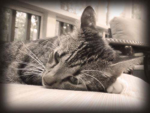 dreamy moxy