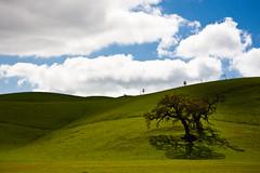 If I could make you understand (henrikj) Tags: california trees sky usa tree green nature clouds 04 location hills fields plains 2008 biology lonelytree fav10 tassajararoad