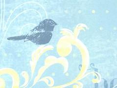 Bluebird Beauty