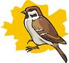 sparrow (3doel82) Tags: fish bird animals insect gambar koleksi ikan belajar burung binatang carnivora serangga mamalia amphibi