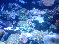 Aquarium Melbourne