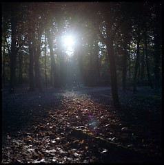monza park (introspectrum : carlo dj) Tags: park trees sunset italy fall nature leaves silhouette kodak insects hasselblad epson monza 500cm specks hassy 400vc v500