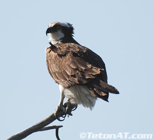 TetonAT.com Osprey