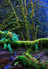 Mossy Bench (Dave Renwald) Tags: oregon moss ferns soggy riparian streamsandrivers