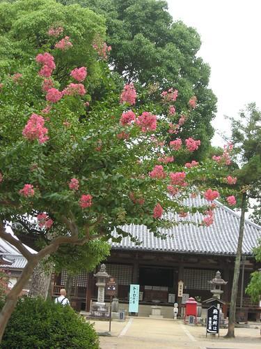 Shikoku pilgrimage(70 Motoyamaji  Temple,本山寺)