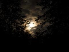 NIght (Brzozus) Tags: moon night dark tress