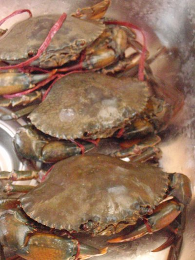 Creamy Butter Crab Recipes — Dishmaps