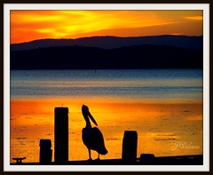 Wishing you all a goodnight (Lady Jayne ~) Tags: sunset lake silhouette pier wrestling jetty australia pelican nsw winner thumbsup twothumbsup bigmomma unanimous anawesomeshot squidsink thumbsupwrestling tuw011