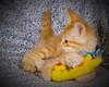 Tiger Portrait (TXShooter) Tags: orange cute cat fun nikon feline funny tiger joy kitty d200 playful rescued energetic strobist