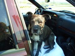 S1050109 (I Got The Memo) Tags: josh zozo mydog