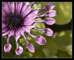 Reminds me of the sun (dog ma) Tags: flower nature dof dogma bigmomma sigma105mm supershot mywinners nikond80 anawesomeshot colorphotoaward youvsthebest photofaceoffwinner pfogold youvsthebestwinner beautifulworldchallenges vosplusbellesphotos pinkwhirl thepinnaclehof