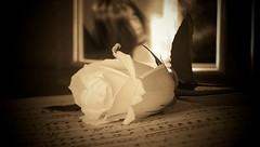 A diva's portrait (divaphoenix) Tags: portrait music woman flower rose sepia portait classical diva elegance musicsheet ltytr2 ltytr1 ltytr3