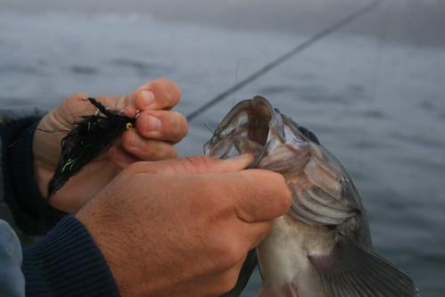 Fishing bottom water florida water salt guide