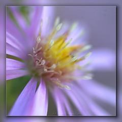 My Blue Heaven (Cyn~) Tags: saint louis greenhouse missouri haefners