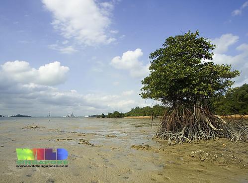 Pulau Semakau sandy shores