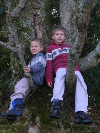 jack & spencer tree