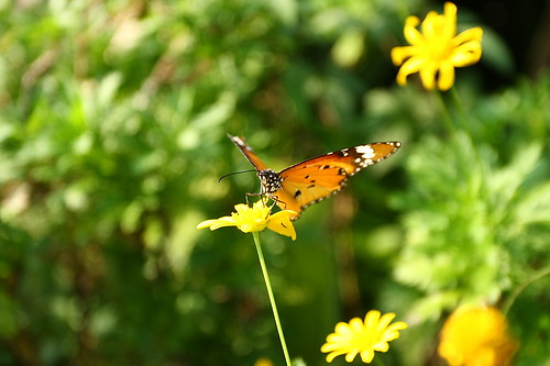 IMG_6588_Butterfly
