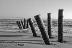 Poteaux: plants l... (tany_kely) Tags: sea blackandwhite mer france beach digital canon landsc